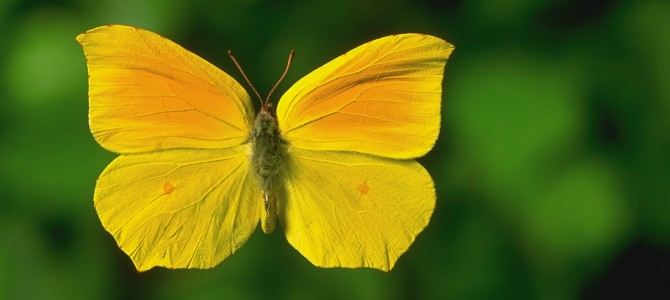 Butterflies in your stomach? | TCM 5-Element Natural Inspirations for health